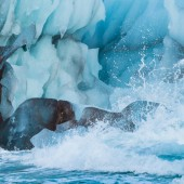 Blue iceberg on Svalbard – – Nikon D4s, 200-500mm @ 260mm, 1/1600sec, f/8 and ISO 1250