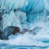 Blue iceberg on Svalbard – – Nikon D4s, 200-500mm @ 260mm, 1/1600sec, f/8 and ISO 1250