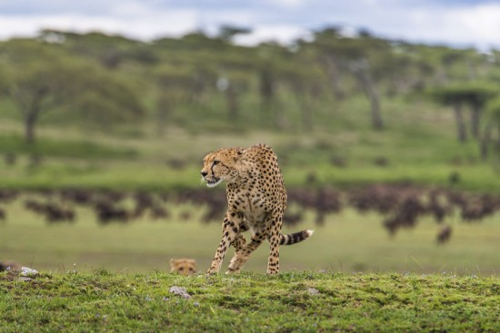 Onn-H-Tanzania-5