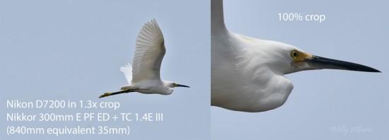 AMZ-egret