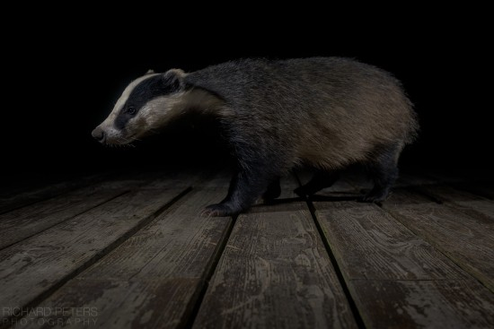 badger_decking_richard_peters_back_garden_safari
