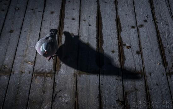 pigeon_decking_richard_peters_back_garden_safari