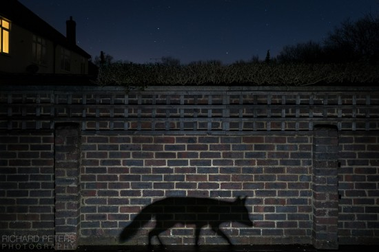 shadow_walker_richard_peters_back_garden_safari