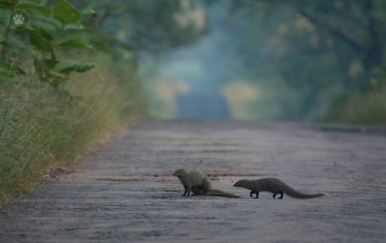 11_Mongoose