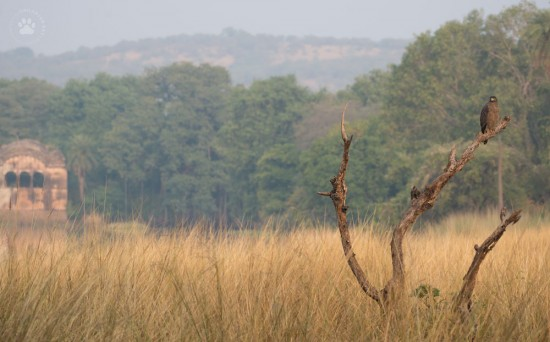 16_Ranthambore_old hunting lodge