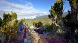 Kilimanjaro_machame_0333
