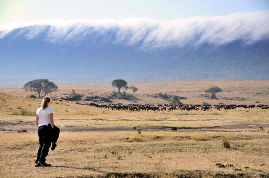 Ngorongoro_1966