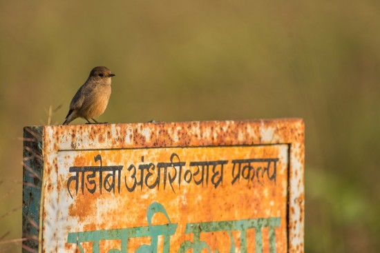 Tadoba_signboard in Hindi