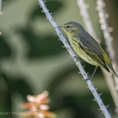 NRbirds1