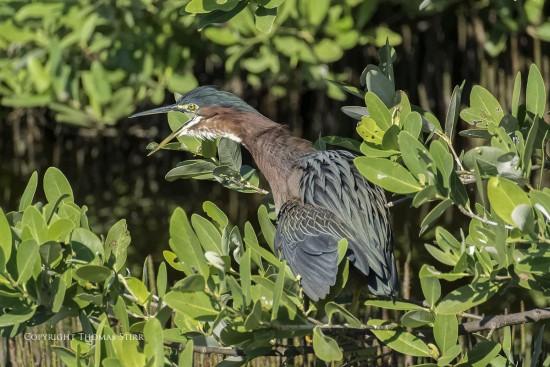 NRbirds14