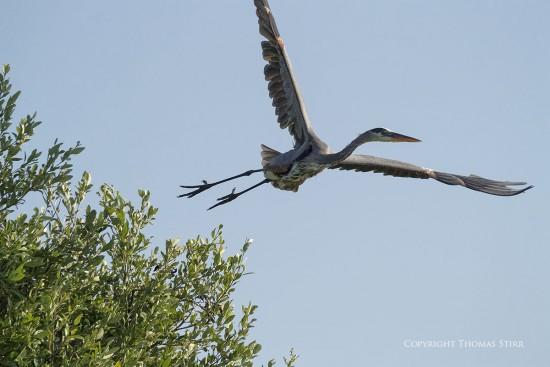 NRbirds15
