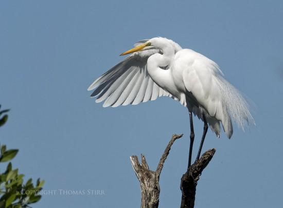 NRbirds17