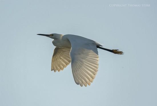 NRbirds18
