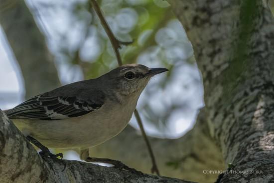 NRbirds19