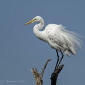 NRbirds2