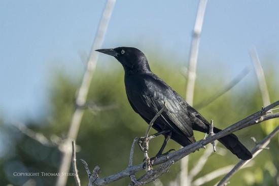 NRbirds20