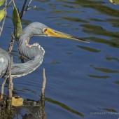 NRbirds21