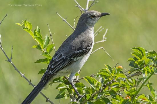 NRbirds22