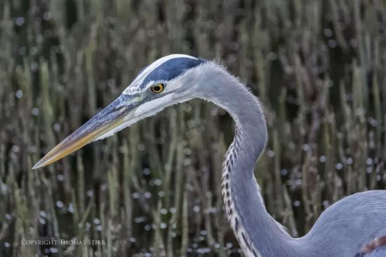 NRbirds23