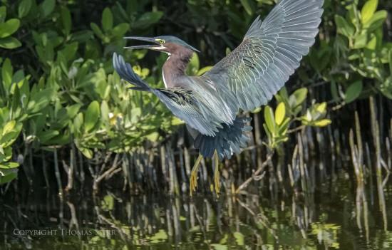 NRbirds3