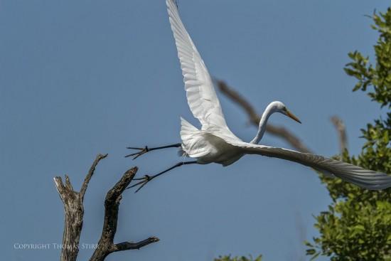 NRbirds4