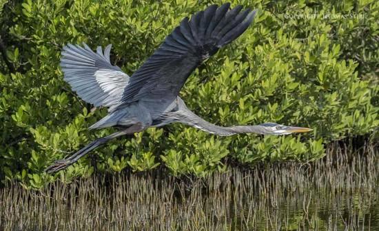 NRbirds5