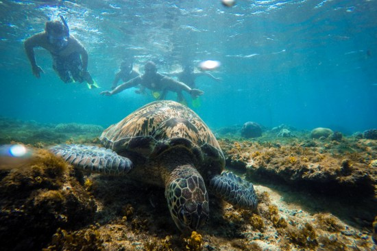 Turtles in Apo island. By GoPro Hero 4