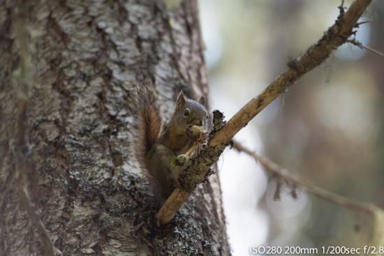 A Squirrel enjoying a feast