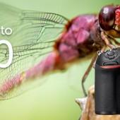 Nikon Spring cashback in the UK