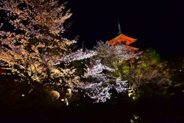 Kyoto cherry blossoms10