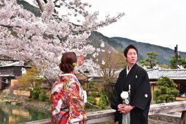 Kyoto cherry blossoms2