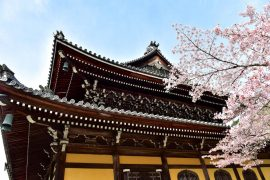 Kyoto cherry blossoms27