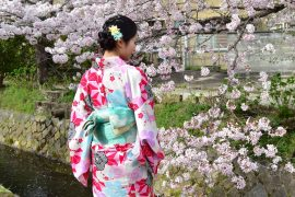 Kyoto cherry blossoms29