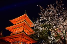 Kyoto cherry blossoms7