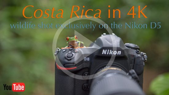 Nikon-D5-DSLR-camera-Costa-Rica-wildlife-video-in-4K