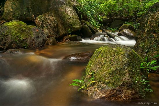 A typical freshwater stream in the Borneo rainforest where many amphibians can be found. D750, Tamron 28-75mm at 28mm.