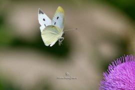 fluturi-2016-016