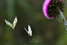 fluturi-2016-020