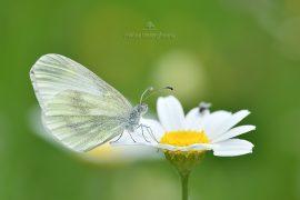 fluturi-d5_008