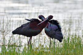 ibis-d500_007_00006