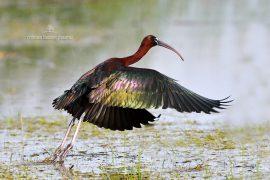 ibis-d500_013_00007