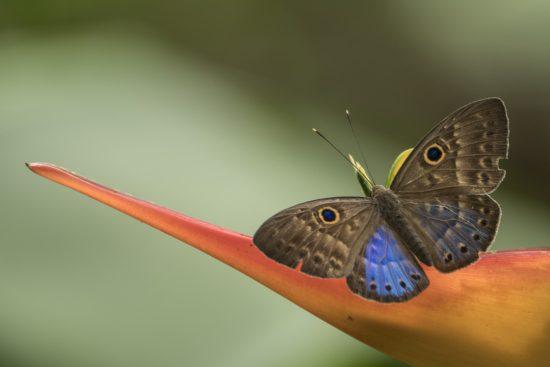 3_butterfly
