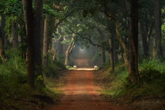 forest-road_dudhwa2_iso5600