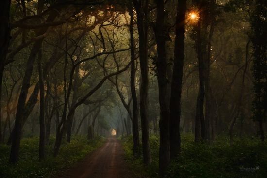 forest-road_early-morning