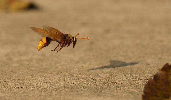 hornet-snapshot-3d-tracking