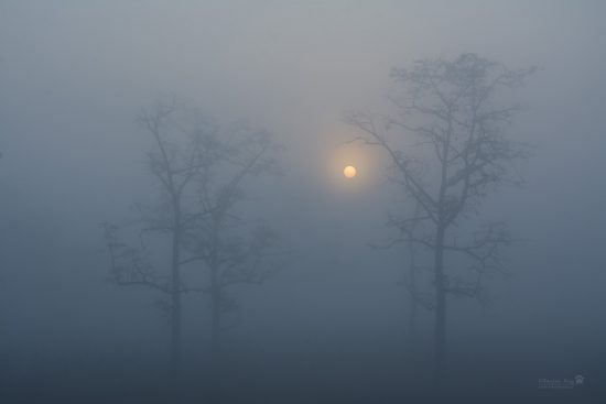 misty-sunrise_grassland