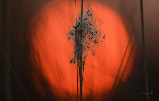 sunset-behind-a-stalk-of-grass