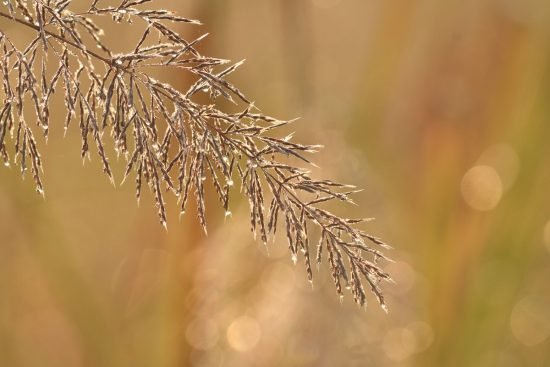 swarvoski_dew_grass