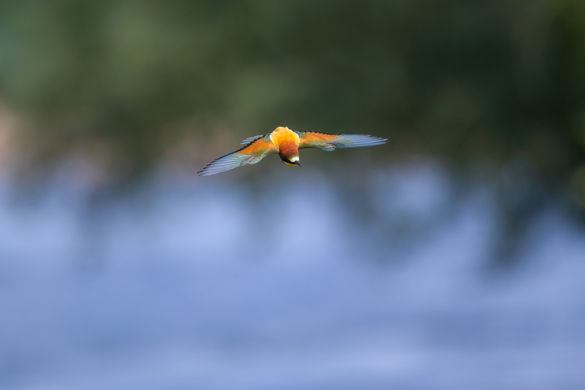 Birding with the Nikon Z6 and the Nikkor 500 f/4 (fast birds