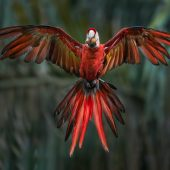 Bird in flight photography – crash course by Steve Perry